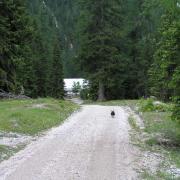 Forststraße zur Möslalm
